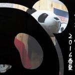 錦パンダ 展示会